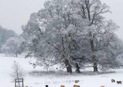Shepherd's Voice Winter 2010